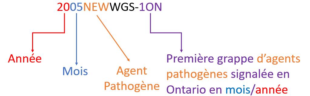 Description : Diagramme illustrant la structure d'un code de grappe. Le code de grappe est 2005NEWWGS-1ON. Voici la structure du code : 20 (année); 05 (mois); NEW (agent pathogène : Salmonella Newport); WGS (identifié au moyen du séquençage du génome entier) -1ON (première grappe d'agents pathogènes signalée en Ontario en mois/année).